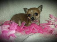 I have 4 (teacup size) chihuahuas all set for their new