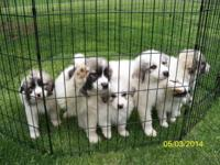 4 Dogs left (both tiniest ones in the photos are sold).