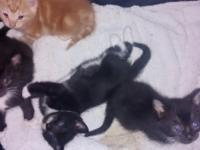 4 kittens free to good home 3 boys 1 girl. in