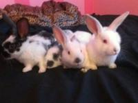 I have 4 adorable hand raised loving bunny rabbits for