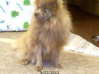 I have a 4 month old female pomeranian for sale....shes
