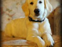 Loving, friendly 4 month old male puppy looking for a