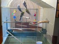I have 4 parakeets that will be 2 next month. They are
