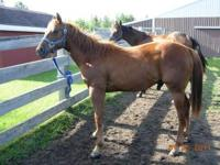 Two of our geldings will be 2 years in April/May. They