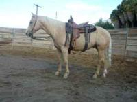 Nice 4 year-old pal. gelding. Has 12 mo. training,