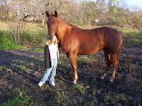 Description 4 year old regestered Quarter horse mare.