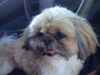 I have a 7 lb female shih tzu named Bella. She has been