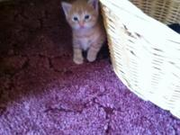 I have 4 yellow tabby kittycats I am marketing. I have