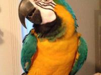 My Blue & Gold Macaw Mishka is pulling at all of my