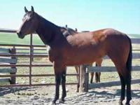 This beautiful registered Quarter Horse mare has alot