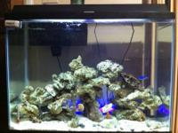 I have a 40g fish tank that I'm looking to sell ASAP!