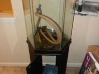 I have a 40 Gallon Hexagon fish tank for sale. Comes