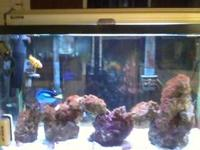 I have a Nemo Dorey Star Fish Blue and Yellow small
