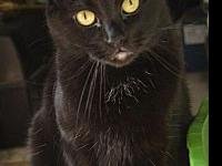 4327 Vader & Princess - LD's story Bonded brother &
