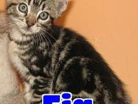 #4423 Fig's story 'Hi there. I'm Fig and I'm an