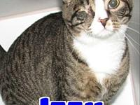 #4432 Izzy-Declawed's story 'Hi there. I'm Izzy and I'm