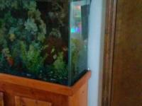 45 gallon fish tank with sturdy oak stand. Hood opens