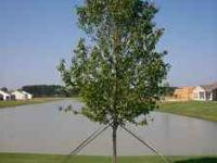 Large tree farm liquidating surplus trees. We have many