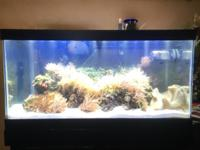 45 gallon tank for sale $ 1200 or best offer. Include