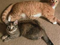 4565 Babies & JoJo - Petco's story Bonded pair JoJo and