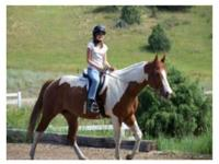 This mare has been shown 4H, used on the trails, used
