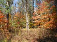 WOODED PROPERTY IN FINGER LAKES REGION NEAR ITHACA