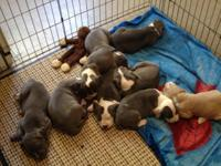 Available now! 4 females, 1 male...re-homing fee of
