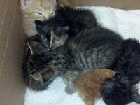 5 Adorable kittens. Were orphaned a few weeks ago. Were