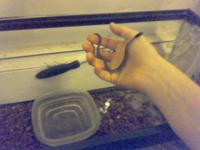 Im selling 5 baby gater snakes along with there 15