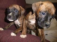 I have 2 brindle males and 3 brindle females . tails