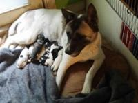 5 lady and nine male Akita puppies. The puppies;. We