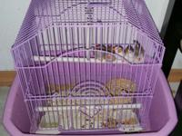 Beautiful Finch Birds, cage and foods. 1 parents with 3