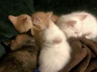 5 charming kittens seeking loving, irreversible homes.