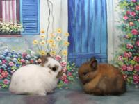 . We are looking for wonderful homes for our bunnies.