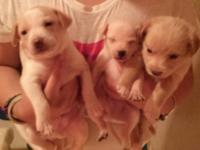 They r 6 weeks old right now, born June 30th. I will be