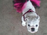 Myah is a 5 month old English Bulldog. She loves