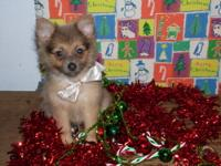 I have 4 male and 1 female Pomeranian puppies for sale.