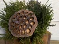 5 Stained Wooden Box with Preserved Fern Arrangement:
