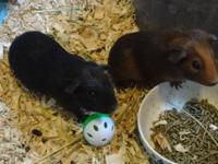 Born 2-27-13. 5 weeks old. Adopt the two females