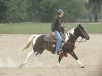 Tadpole is a 5 yr. gelding for sale . he is trained to