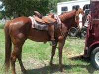 Lightening is a 5 year old quarter horse gelding.