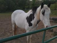 I have a 5 year old Tennessee walker. was broke to ride
