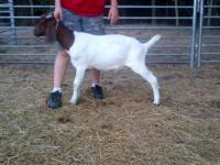I have a young doeling from this spring I would like to