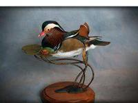 taxidermy for sale in Michigan Classifieds & Buy and Sell in