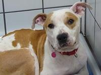 53307 Lotus's story We welcome you to our shelter to