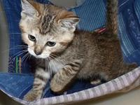 54435 Itty Bit's story We welcome you to our shelter to
