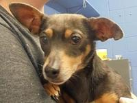 54770 Dolly's story We welcome you to our shelter to