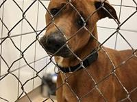 54786 Jocko's story We welcome you to our shelter to