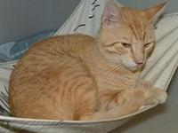 54811 Thor's story We welcome you to our shelter to