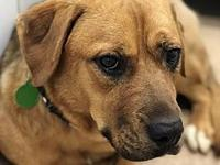54878 Brownie's story We welcome you to our shelter to